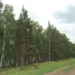 Фермерское хозяйство и 1260 га земли, Челябинск