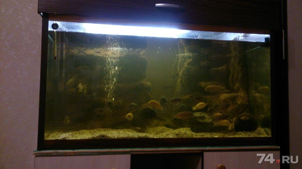 Сделать аквариум на 250 литров своими руками 29