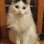 Лапочка кошка в добрые руки, Челябинск