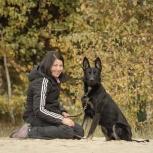 Дрессировка, передержка собак., Челябинск