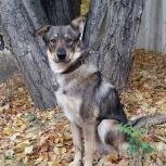 Собака Бинго - отличный друг и охранник, Челябинск
