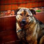 Собака соня в добрые руки, Челябинск