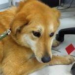Собака Флора в добрые руки, Челябинск