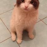 Хорошенький котик, Челябинск