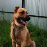 Собака Хан в добрые руки, Челябинск
