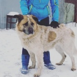 Пес Барон в добрые руки, Челябинск