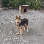 Пёс в частный дом., Челябинск
