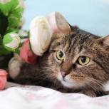 Кошечка  с совиными глазками ищет дом, Челябинск