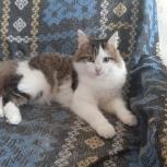 Котёнок подросток в добрые руки, Челябинск