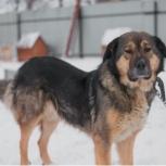 Собака лиза в добрые руки, Челябинск