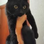 Найден кот, Челябинск