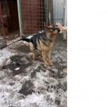 Пропала собака, Челябинск