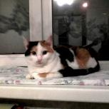 Кругленькая ватрушечка-сладкая кошечка, Челябинск
