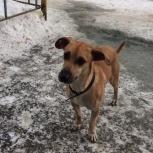 Найден пес, Челябинск