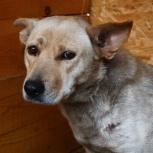 собака Берта в добрые руки, Челябинск