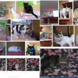 Разные котики и кошечки на выбор, Челябинск