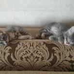 Отдам котят, Челябинск