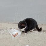 Отличный парень нуждается в домашнем уюте, кот, Челябинск