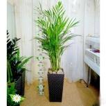 Напольное растение. Пальма, Челябинск