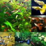 Красивые аквариумные рыбки, Челябинск
