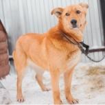 собака Бэлла в добрые руки, Челябинск