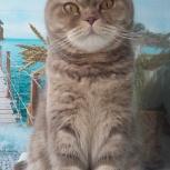 Зоо-гостиница для кошек (домашние условия), Челябинск