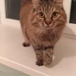 Золотце кошка в добрые руки, Челябинск