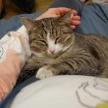 Усатый-полосатый кот Арчик ищет любящих хозяев, Челябинск