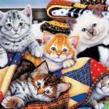 Передержка кошек в домашних условиях, Челябинск
