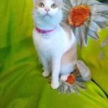 Белоснежная девочка, отдам кошку Зефирку, Челябинск