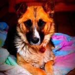 Собака лаки в добрые руки, Челябинск