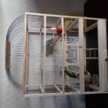 Клетка с попугаями, Челябинск