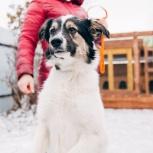 пес в добрые руки, Челябинск