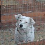 Собака белка в добрые руки, Челябинск