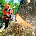 Спил деревьев, Челябинск