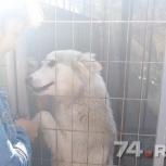 Срочно нужно пристроить собаку, Челябинск