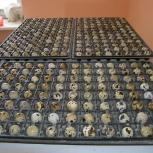 инкубационное яйцо перепелов, Челябинск