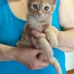 Кроха кот в поисках мам и пап, Челябинск