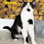 Филя -котёнок подросток в добрые руки., Челябинск