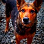 Собака лина в добрые руки, Челябинск