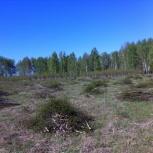Спил деревьев. Санитарная обрезка деревьев, Челябинск