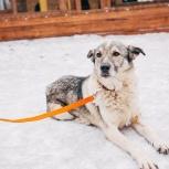 Собака Люся в добрые руки, Челябинск