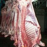 Продам  говядину, коровы, полутуши, 100+, 1 категория, Челябинск