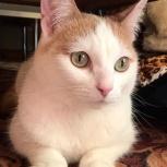 Ищем нового хозяина для котика, Челябинск
