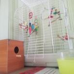 Волнистые попугайчики с клеткой, Челябинск