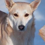 В надежные руки собака, Челябинск