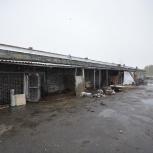 Фермерское хозяйство. Свиноферма, Челябинск