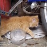 Отдам в добрые руки котят, Челябинск