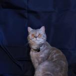 Златушка кошка, Челябинск