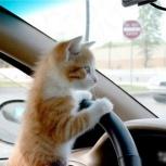 Перевозка кошек (кото- такси), Челябинск